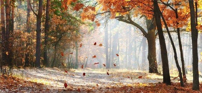 het is herfst